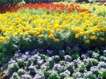 Butchart Gardens—Victoria 002