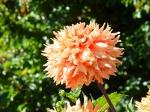 Butchart Gardens—Victoria 004