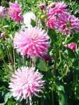 Butchart Gardens—Victoria 009