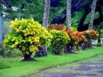 Tobago Island Taxi Tour