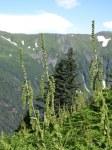 Mount Roberts overlooking Juneau 21