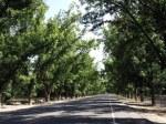Stahman Pecan Orchard
