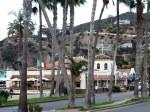 Palms along the Main Drag