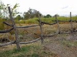 That Great Rustic Fence — Can't Get Enough of It