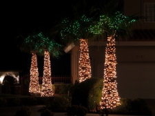 Decorated Palms