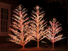 Incandescent Trees