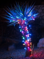 LEDs on a Yucca