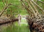 Mangrove swamp Roatan