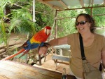 Friendly Parrot in Roatan