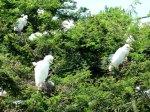 Birds of Antigua