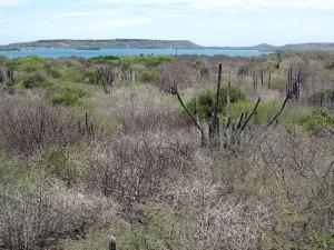 Desert Shrubs and Cactii