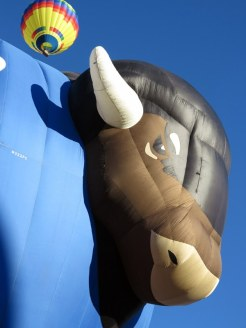 No Bull — That's a Buffalo