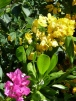 Half Moon Cay Flowers