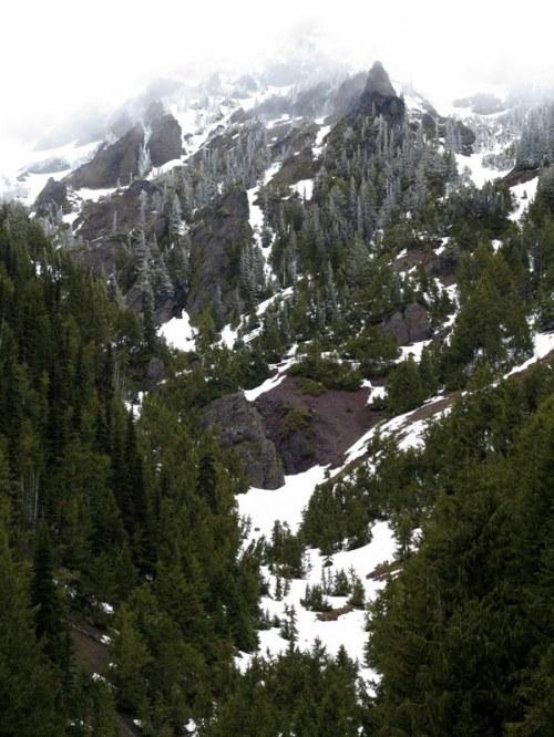 On the Way to Hurricane Ridge — Olympic Peninsula, Washington