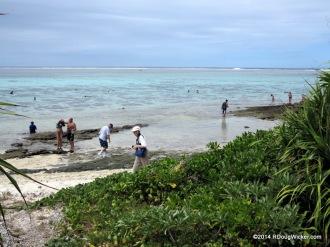Seeking seashells on the seashore