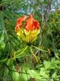 Inyeug Flora