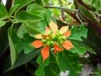 Mystery Island Flora