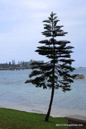 Nouméa Tree