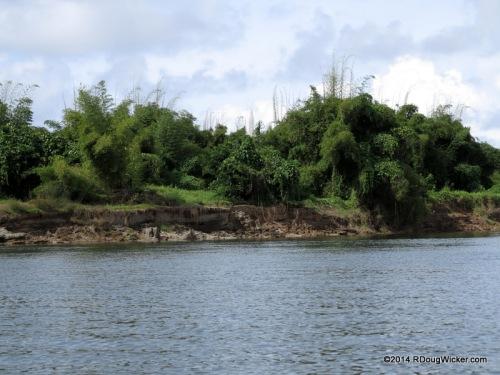 Along the Navua River
