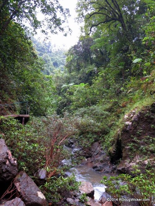 Trekking into the jungle