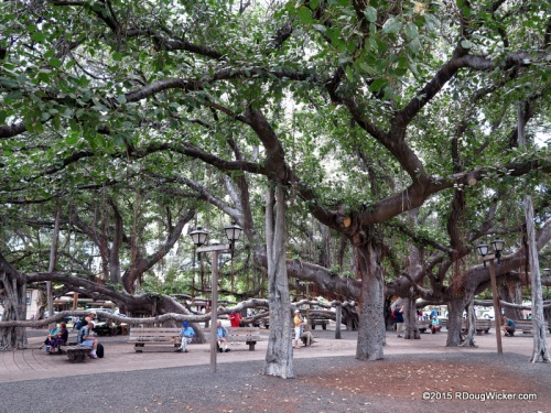 Lahaina Banyan Court Park — Home to the largest banyan tree in the Hawaiian Islands