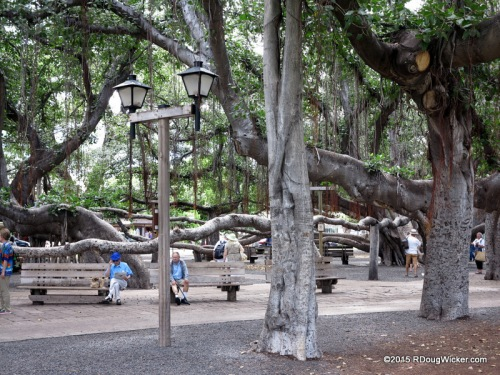 Lahaina Banyan Court Park — Banyan tree planted in 1873