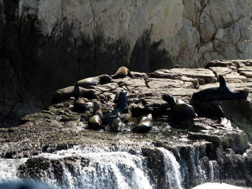 Seals of Cabo