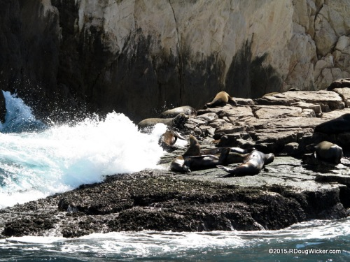 Sunning Seals with Sunny Smiles