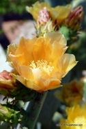 Springtime Desert Flora