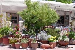 The San Albino Store