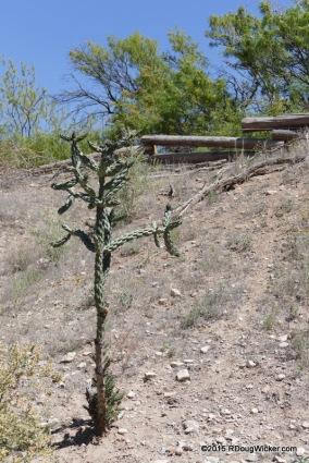 "Cactus ""Tree"""