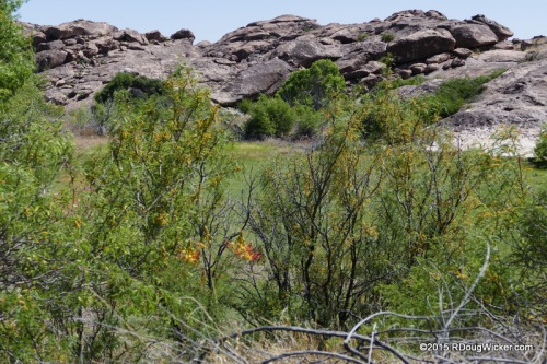 Hueco Tanks Wetland