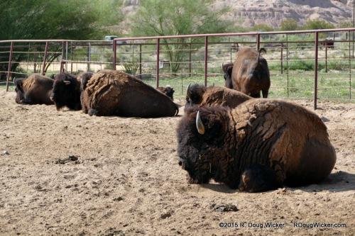 Indian Cliffs Ranch-051