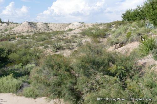 Chihuahua Desert vegetation