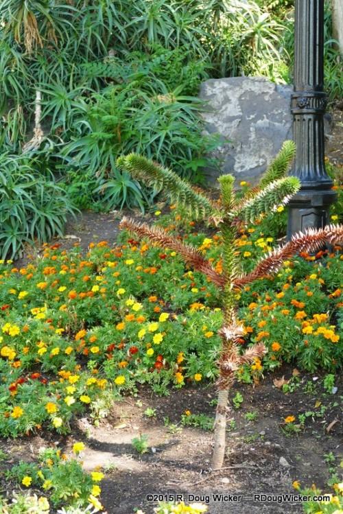 Santa Lucía Hill garden