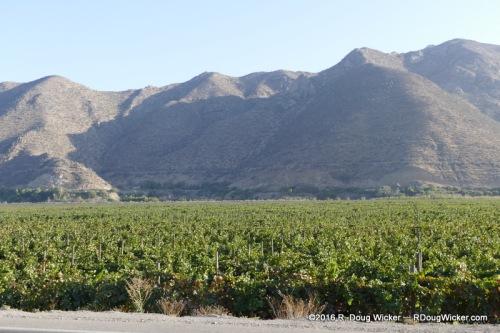 Elqui Valley vineyard