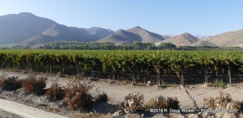 Elqui Valley Vineyard Panorama