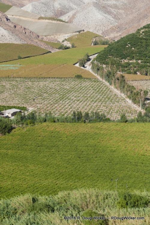 Elqui Vineyard
