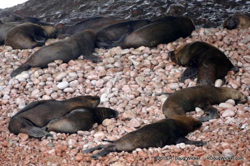 Circling the Sea Lions