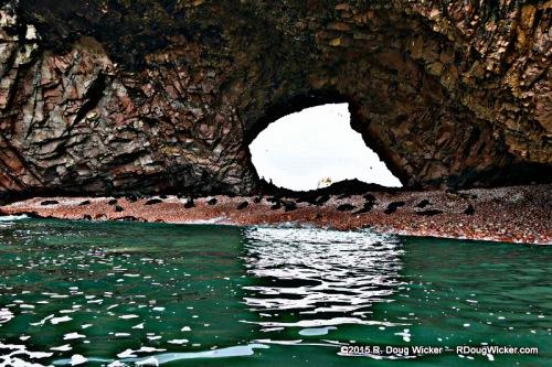 Shady Sea Lion Beach