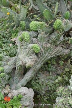 Cactus at the Larco Museum