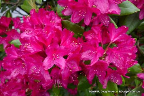 Ketchikan Flowers