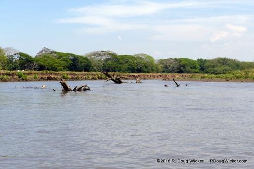 Tárcoles River
