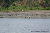 Lone Bird on Shore