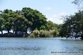 Trees of Lake Nicaragua