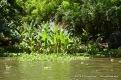 Tropical growth