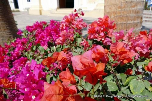 Todos Santos flowers