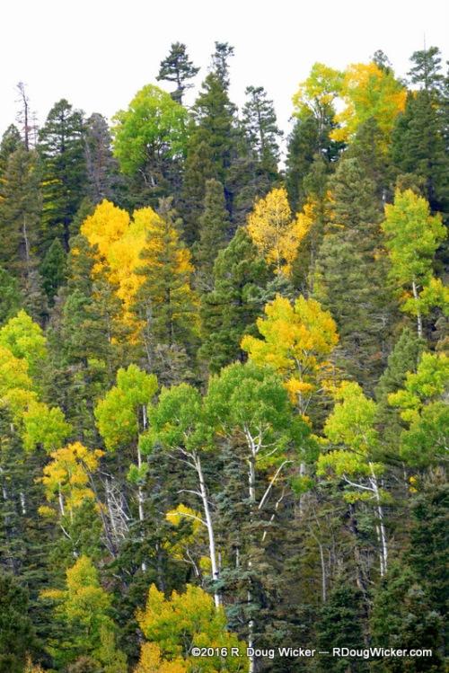 Enchanted Circle Fall Foliage Favorites