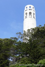 Coit above the Trees